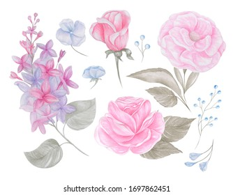 Watercolor pink flower set.  Delicate flowers.  Lilac and roses.