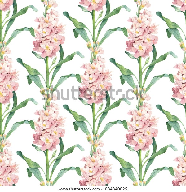 Watercolor pink garden matthiola flower seamless pattern on white background. Elegant botanical drawing for decor, wallpaper, textile design.