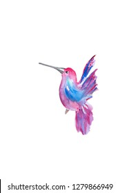 Watercolor pink hummingbird. Hand drawn painting isolated on white background