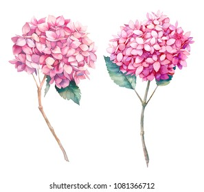 Watercolor pink hydrangea flower set. Hand painted botanical illustrations of summer garden plant. Natural objects isolated on white background