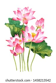 Watercolor pink lotus bouquet on a white background illustration.