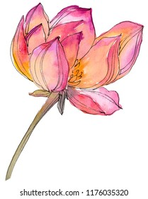 Watercolor pink lotus flower. Floral botanical flower. Isolated illustration element. Aquarelle wildflower for background, texture, wrapper pattern, frame or border.