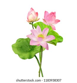 Watercolor Pink Lotus Flower and Leaves with bud Bouquet. Hand Painting Illustration isolated on white background.