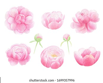Watercolor pink peony hand drawn set isolated on white background. Floral banner, wedding, arrangement invitation, greeting card template, thank you card, save the date.  Summer pink flowers.
