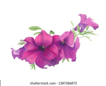 Watercolor pink petunia flower. Watercolor drawing petunia flower.Can be used as romantic background for wedding invitations, greeting cards, postcards, textile.