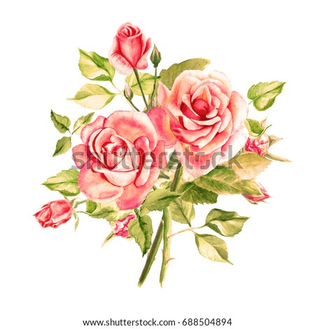 watercolor pink roses bouquet roses roseのイラスト素材 688504894