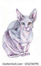 Watercolor pink sphynx cat on a white background