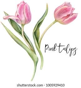 Watercolor pink tulips.