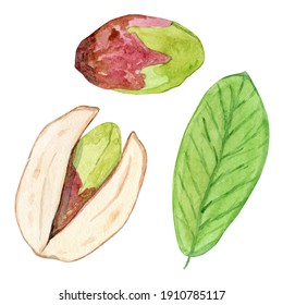 watercolor pistachio set isolated on white background. Hand drawn nut in nutshell illustration