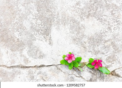 Watercolor of Plant growing with red flower and green leaf. young tree through crack in pavement free background. digital art processing concept.
