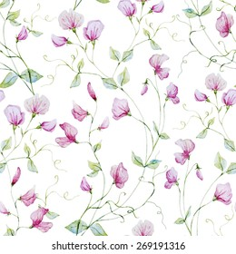 Watercolor, plant, sweet peas, botany, flower, background, texture, wallpaper, seamless, pink