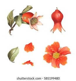 Watercolor Pomegranate blossom & fruit set, isolated on white background. Hand drawn botanical elements branch, flower, petal, leaf & fruit for Save the Date, Valentines day Cards, invitation, Covers.