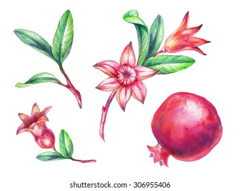 watercolor pomegranate fruit leaves and flowers illustration, design elements isolated on white background