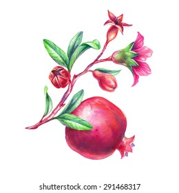 watercolor pomegranate illustration, branch with leaves, flowers and fruits, design element isolated on white background