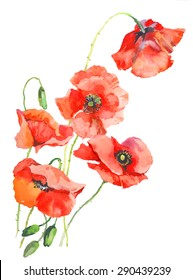 watercolor poppies 1