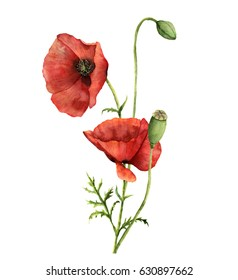 Watercolor poppies bouquet. Hand painted floral illustration with leaves, seed capsule and branches isolated on white background. For design, print and fabric.