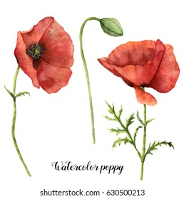 Watercolor poppies set. Hand painted floral illustration with leaves, seed capsule and branches isolated on white background. For design, print and fabric.