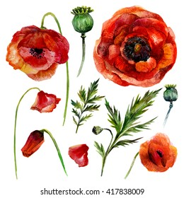 Watercolor Poppies Set. Isolated on white background. Vintage style.