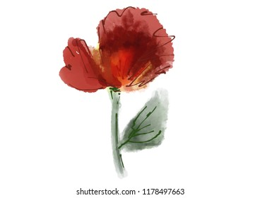 Watercolor poppy flower on white background isolated for printing