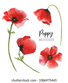 Watercolor poppy flowers isolated on white background. Botanical illustration