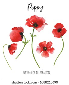 Watercolor poppy flowers. Red poppies. Hand painted floral illustration