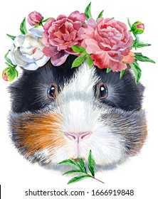 Watercolor portrait of Abyssinian guinea pig with flowers on white background