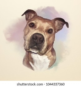 Watercolor Portrait of American pit bull terrier, a companion and family dog breed. Animal Art collection: Dogs. Hand Painted Illustration of Pets. Good for banner, print T-shirt, card