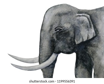 watercolor portrait beside elephant  hand drawn  isolated white background.
