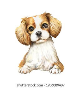 Watercolor portrait of dog King Charles Spaniel, white with red spots dog Spaniel