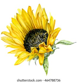 watercolor print of sunflower