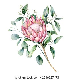 Watercolor protea bouquet with eucalyptus leaves. Hand painted pink flower with branch isolated on white background. Nature botanical illustration for design, print. Realistic delicate plant