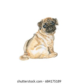 Watercolor  pug dog portrait. Hand drawn cute puppy. Painting isolated pets illustration on white background