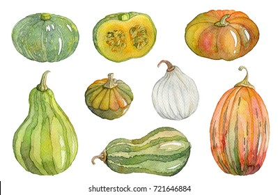 Watercolor pumpkin, squash, marrow set. Isolated elements on white background. Hand drawn illustration
