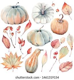 Watercolor pumpkins set. Autumn decoration floral design. Watercolor isolated. Botanical illustration. Thanksgiving card.