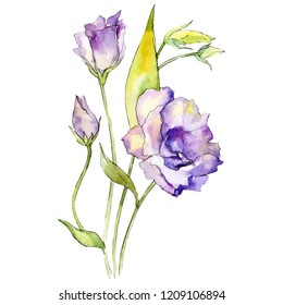 Watercolor purple eustoma flower. Floral botanical flower. Isolated illustration element. Aquarelle wildflower for background, texture, wrapper pattern, frame or border.