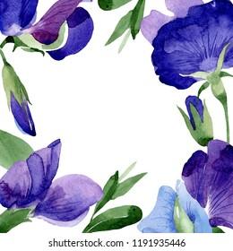 Watercolor purple sweet pea flower. Floral botanical flower. Frame border ornament square. Aquarelle wildflower for background, texture, wrapper pattern, frame or border.