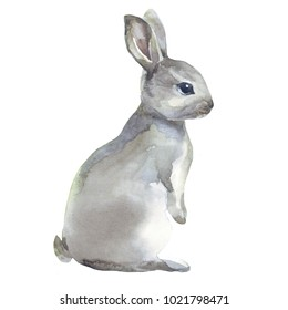 Watercolor rabbit hare isolated illustration on white background
