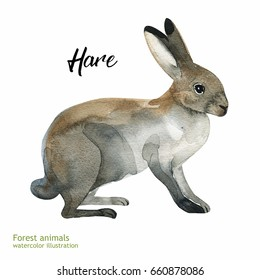 Watercolor rabbit painting. Hand painted realistic illustration isolated on white background. Realistic forestry animal art.