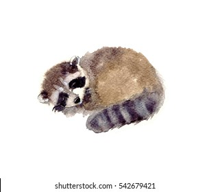 Watercolor Raccoon forest animal. Cute baby raccoon on the white background. Forest Animal sketch illustration