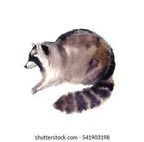 Watercolor Raccoon forest animal. Sketch animal illustration isolated on the white background