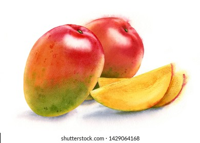 Watercolor realistic botanical illustration mango whole arrangement 2 elements and slices fresh ripe sweet yellow with red tropical fruit commercial isolated on white hand painted composition