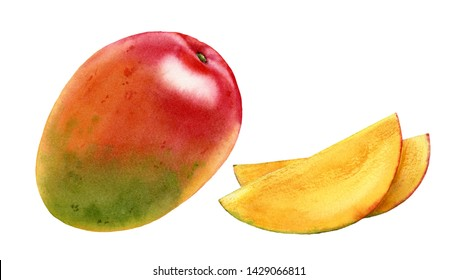 Watercolor realistic botanical illustration of mango whole and slices set fresh ripe sweet yellow with red tropical fruit commercial isolated on white hand painted juicy nutritious food collection
