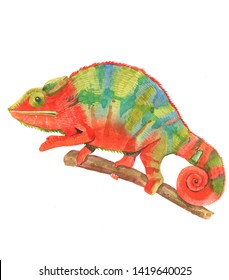 Watercolor realistic chameleon animal isolated on a white background illustration.