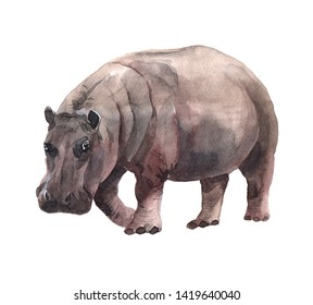 Watercolor realistic  hippopotamus tropical animal isolated on a white background illustration.