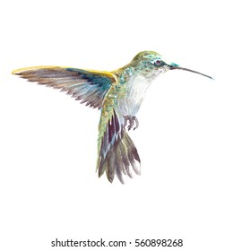Watercolor realistic hummingbird, colibri tropical bird animal isolated on a white background illustration.