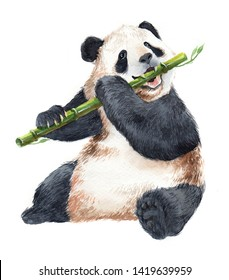 Watercolor realistic panda  animal isolated on a white background illustration.