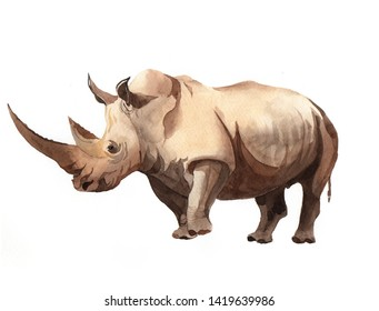 Watercolor realistic rhinoceros animal isolated on a white background illustration.