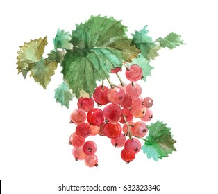 Watercolor Red currant food isolated on a white background illustration.