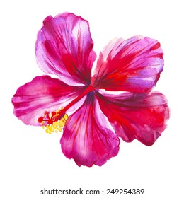 Watercolor red hibiscus. Hand drawn illustration. Raster.
