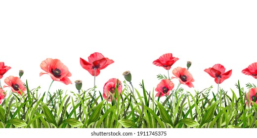 Watercolor red poppies. Wild flower seamless border isolated on white. Hand painting illustration for interior decoration, textile printing, printed issues, invitation and greeting cards.